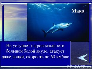 Не уступает в кровожадности большой белой акуле, атакует даже лодки, скорость до