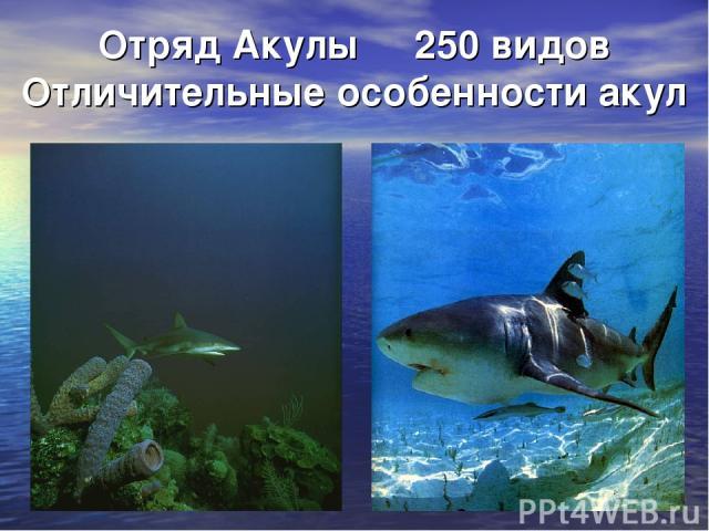 Отряд Акулы 250 видов Отличительные особенности акул