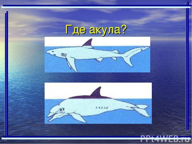 Где акула?
