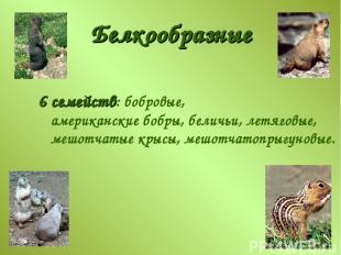 Белкообразные 6 семейств: бобровые, американские бобры, беличьи, летяговые, мешо