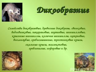 Дикообразные Семейства дикобразовые, древесные дикобразы, свинковые, водосвинков