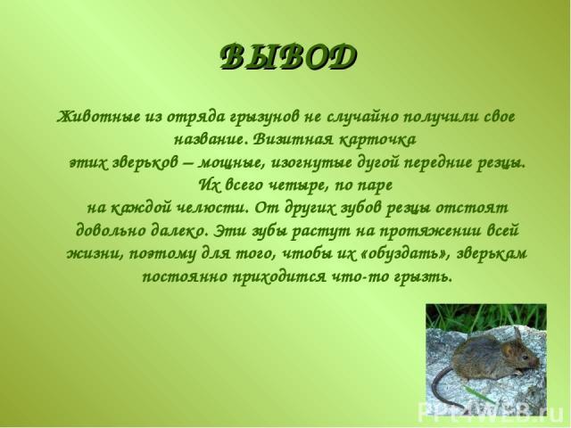 ВЫВОД Животные из отряда грызунов не случайно получили свое название. Визитная карточка этих зверьков – мощные, изогнутые дугой передние резцы. Их всего четыре, по паре на каждой челюсти. От других зубов резцы отстоят довольно далеко. Эти зубы расту…