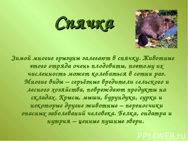 Зимой многие грызуны залегают в спячку. Животные этого отряда очень плодовиты, поэтому их численность может колебаться в сотни раз. Многие виды – серьёзные вредители сельского и лесного хозяйства, повреждают продукты на складах. Крысы, мыши, бурунду…
