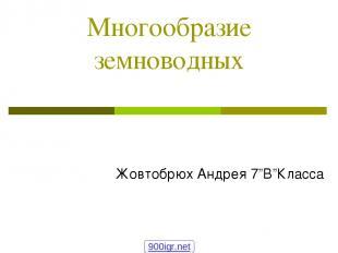 """Многообразие земноводных Жовтобрюх Андрея 7""""В""""Класса 900igr.net"""