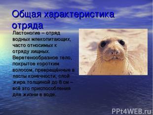 Общая характеристика отряда Ластоногие – отряд водных млекопитающих, часто относ