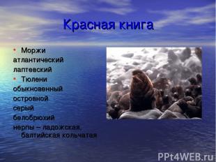 Красная книга Моржи атлантический лаптевский Тюлени обыкновенный островной серый