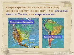 * вторая группа расселилась по всему Американскому континенту – это обезьяны Нов