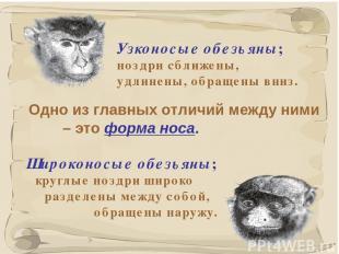 * Одно из главных отличий между ними – это форма носа. Узконосые обезьяны; ноздр