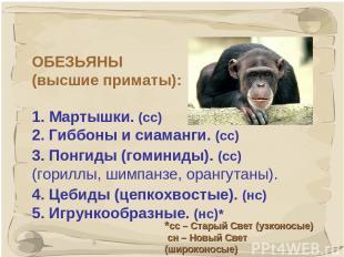 * ОБЕЗЬЯНЫ (высшие приматы): 1. Мартышки. (сс) 2. Гиббоны и сиаманги. (сс) 3. По