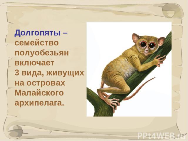 * Долгопяты – семейство полуобезьян включает 3 вида, живущих на островах Малайского архипелага.