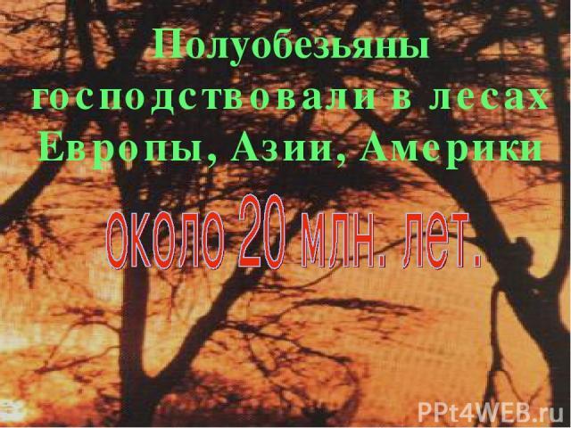 * Полуобезьяны господствовали в лесах Европы, Азии, Америки