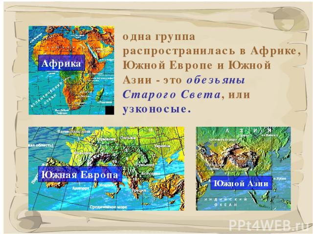 * одна группа распространилась в Африке, Южной Европе и Южной Азии - это обезьяны Старого Света, или узконосые.
