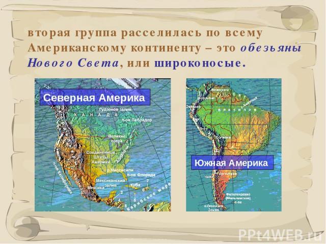 * вторая группа расселилась по всему Американскому континенту – это обезьяны Нового Света, или широконосые.