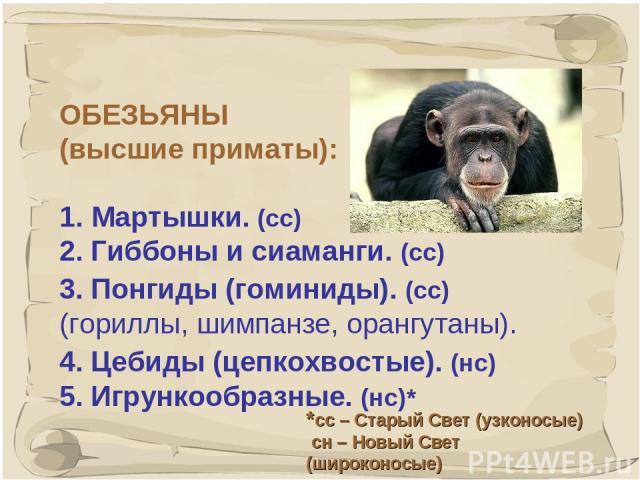 * ОБЕЗЬЯНЫ (высшие приматы): 1. Мартышки. (сс) 2. Гиббоны и сиаманги. (сс) 3. Понгиды (гоминиды). (сс) (гориллы, шимпанзе, орангутаны). 4. Цебиды (цепкохвостые). (нс) 5. Игрункообразные. (нс)* *сс – Старый Свет (узконосые) сн – Новый Свет (широконосые)