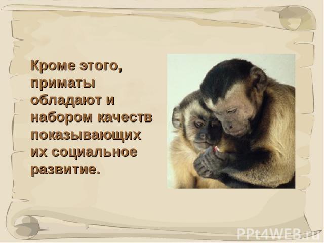* Кроме этого, приматы обладают и набором качеств показывающих их социальное развитие.