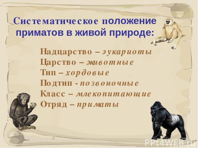 * Систематическое положение приматов в живой природе: Надцарство – эукариоты Царство – животные Тип – хордовые Подтип - позвоночные Класс – млекопитающие Отряд – приматы