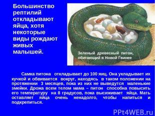Большинство рептилий откладывают яйца, хотя некоторые виды рождают живых малышей