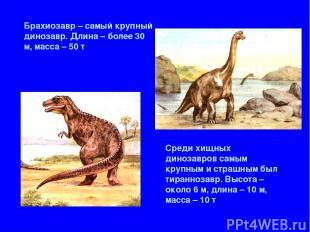 Брахиозавр – самый крупный динозавр. Длина – более 30 м, масса – 50 т Среди хищн