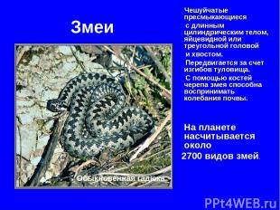 Змеи Чешуйчатые пресмыкающиеся с длинным цилиндрическим телом, яйцевидной или тр