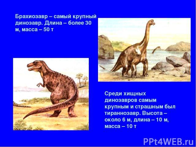 Брахиозавр – самый крупный динозавр. Длина – более 30 м, масса – 50 т Среди хищных динозавров самым крупным и страшным был тираннозавр. Высота – около 6 м, длина – 10 м, масса – 10 т