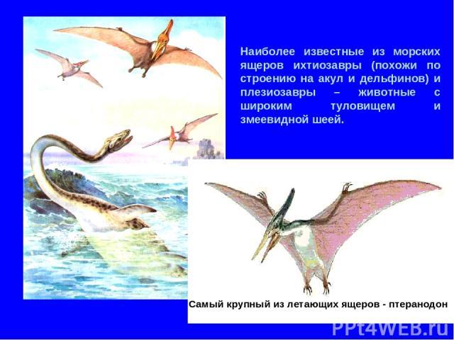 Наиболее известные из морских ящеров ихтиозавры (похожи по строению на акул и дельфинов) и плезиозавры – животные с широким туловищем и змеевидной шеей. Самый крупный из летающих ящеров - птеранодон