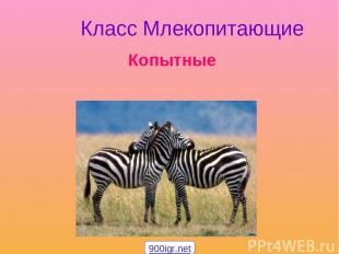Класс Млекопитающие Копытные 900igr.net