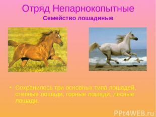 Отряд Непарнокопытные Сохранилось три основных типа лошадей, степные лошади, гор