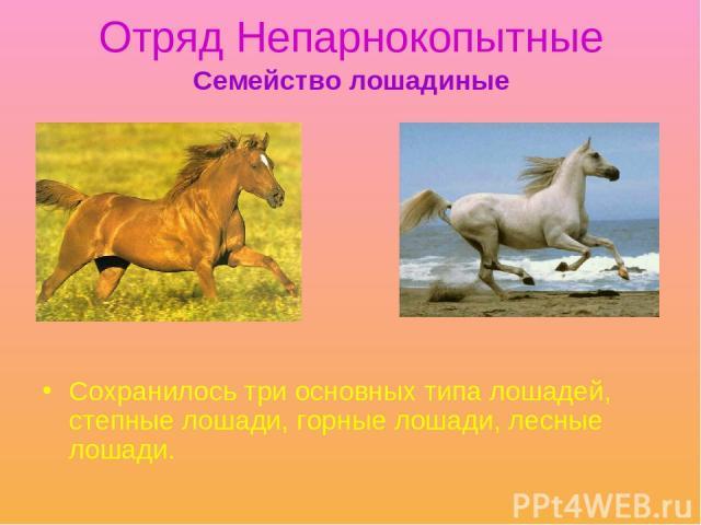 Отряд Непарнокопытные Сохранилось три основных типа лошадей, степные лошади, горные лошади, лесные лошади. Семейство лошадиные