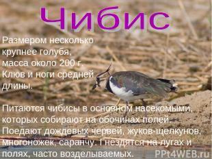 Размером несколько крупнее голубя, масса около 200 г. Клюв и ноги средней длины.