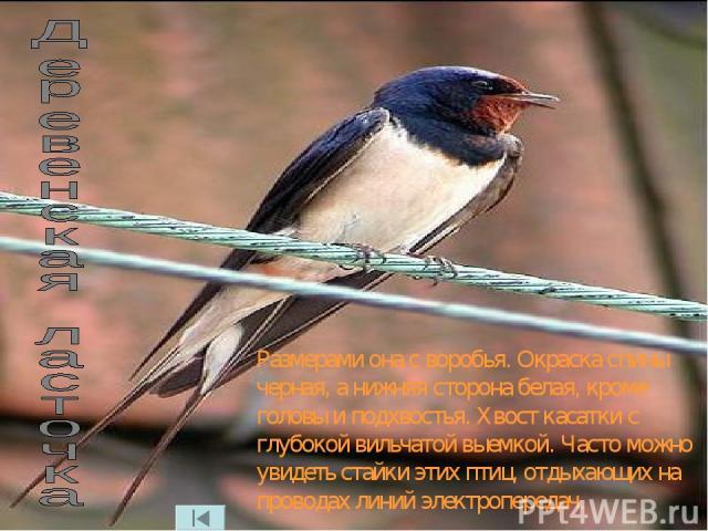 Размерами она с воробья. Окраска спины черная, а нижняя сторона белая, кроме головы и подхвостья. Хвост касатки с глубокой вильчатой выемкой. Часто можно увидеть стайки этих птиц, отдыхающих на проводах линий электропередач.