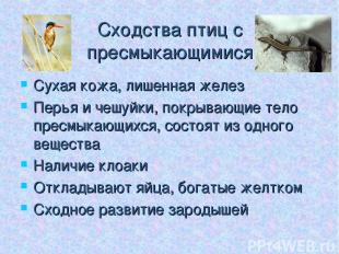 Сходства птиц с пресмыкающимися Сухая кожа, лишенная желез Перья и чешуйки, покр
