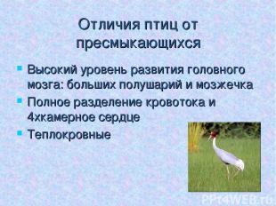 Отличия птиц от пресмыкающихся Высокий уровень развития головного мозга: больших