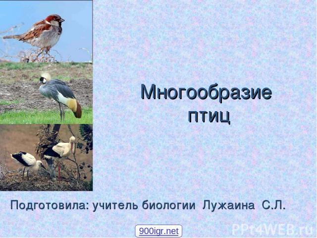 Многообразие птиц Подготовила: учитель биологии Лужаина С.Л. 900igr.net