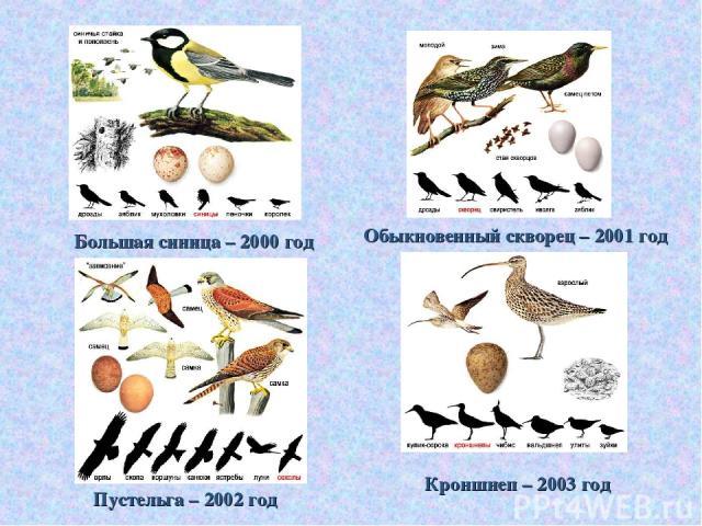 Большая синица – 2000 год Обыкновенный скворец – 2001 год Пустельга – 2002 год Кроншнеп – 2003 год