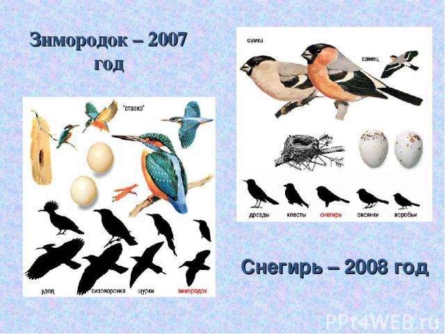 Зимородок – 2007 год Снегирь – 2008 год
