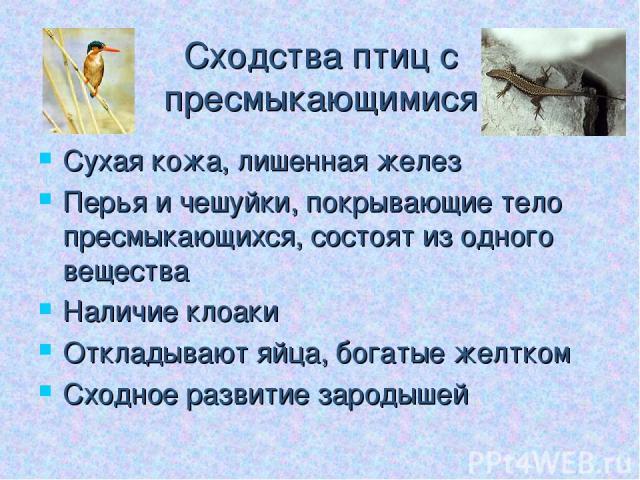 Сходства птиц с пресмыкающимися Сухая кожа, лишенная желез Перья и чешуйки, покрывающие тело пресмыкающихся, состоят из одного вещества Наличие клоаки Откладывают яйца, богатые желтком Сходное развитие зародышей