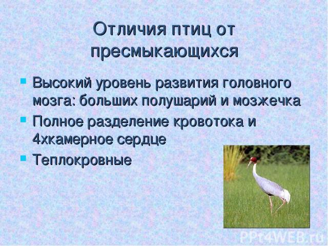 Отличия птиц от пресмыкающихся Высокий уровень развития головного мозга: больших полушарий и мозжечка Полное разделение кровотока и 4хкамерное сердце Теплокровные