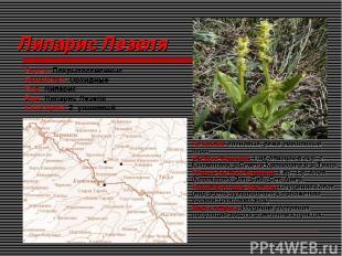 Липарис Лезеля Отдел: Покрытосеменные Семейство: Орхидные Род: Липарис Вид: Липа