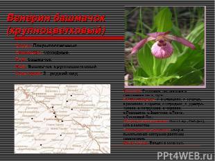 Венерин башмачок (крупноцветковый) Отдел: Покрытосеменные Семейство: Орхидные. Р