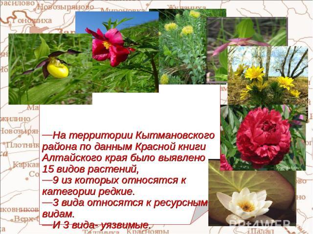 На территории Кытмановского района по данным Красной книги Алтайского края было выявлено 15 видов растений, 9 из которых относятся к категории редкие. 3 вида относятся к ресурсным видам. И 3 вида- уязвимые.