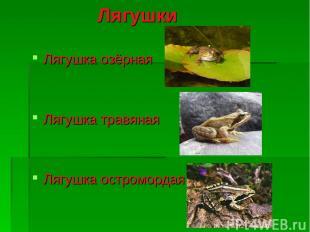Лягушки Лягушка озёрная Лягушка травяная Лягушка остромордая