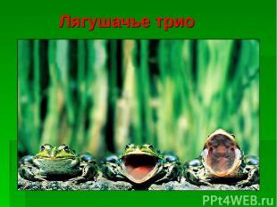 Лягушачье трио