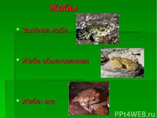 Жабы Зелёная жаба Жаба обыкновенная Жаба- ага