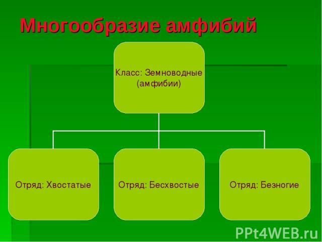 Многообразие амфибий