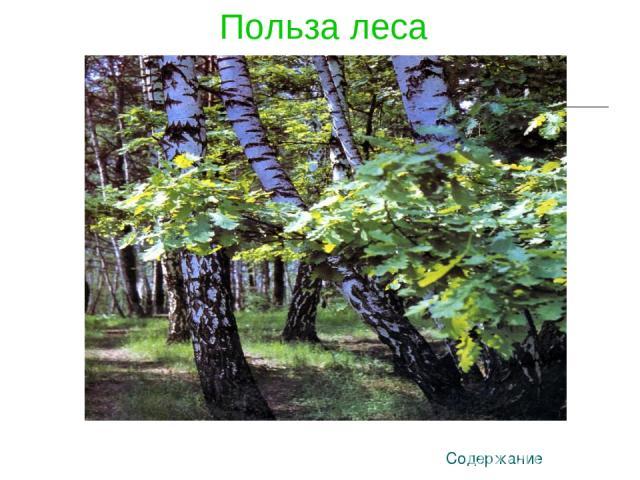 Польза леса Содержание