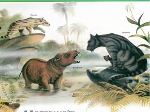 В палеогене климат был ровным тропическим. Практически всяЕвропабыла покрыта в
