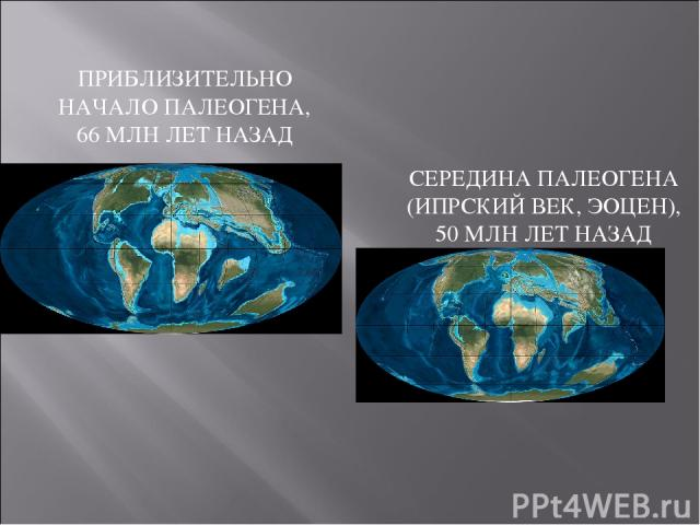ПРИБЛИЗИТЕЛЬНО НАЧАЛО ПАЛЕОГЕНА, 66 МЛН ЛЕТ НАЗАД СЕРЕДИНА ПАЛЕОГЕНА (ИПРСКИЙ ВЕК, ЭОЦЕН), 50 МЛН ЛЕТ НАЗАД