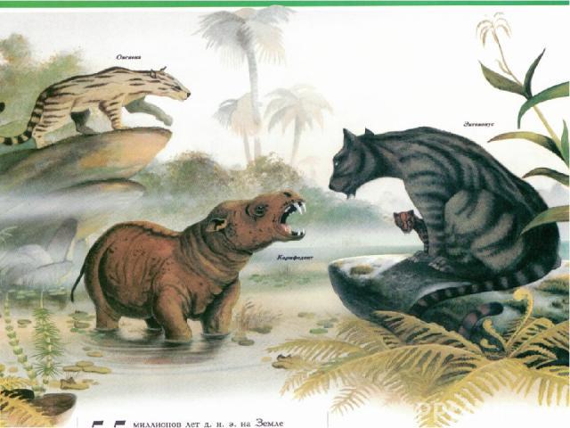 В палеогене климат был ровным тропическим. Практически всяЕвропабыла покрыта вечнозелёнымитропическими лесами, и лишь в северных областях произрасталилистопадные растения. Во второй половине палеогена климат становится болееконтинентальным, поя…