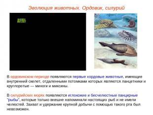 Эволюция животных. Ордовик, силурий В ордовикском периоде появляются первые хорд