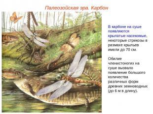 Палеозойская эра. Карбон В карбоне на суше появляются крылатые насекомые, некото